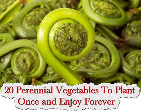 20 perennial vegetables to plant once and enjoy forever