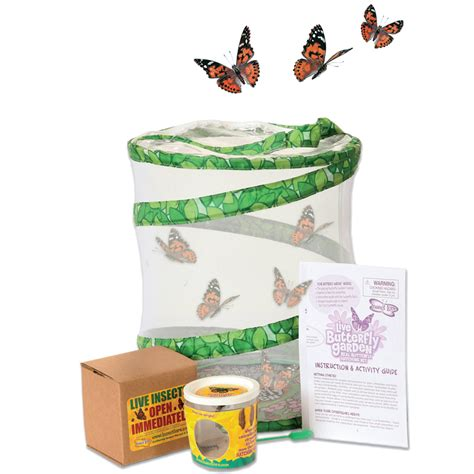 Butterfly Garden Kit live butterfly garden kit exploring nature mulberry bush