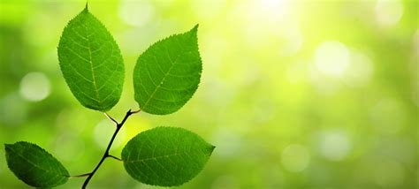 How To Decorate An Office by Climate And Environmental Psychology Contributes To A