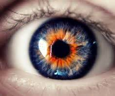 the rarest eye color 1000 ideas about eye colors on eye color