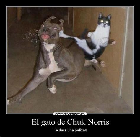 casa cuck chuck norris vs trollface entra o chuck norris va a tu