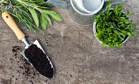ortaggi in vaso calendario della semina degli ortaggi in vaso leitv