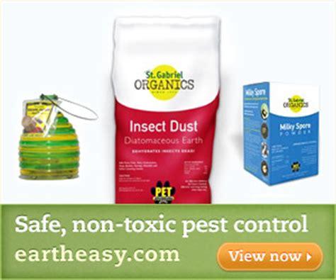 non toxic garden pest catching a swarm of honey bees the easy way carolina