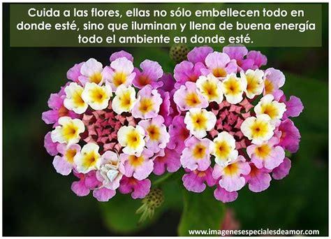 imagenes de rosas moradas con frases flores bonitas con frases imagenes especiales de amor