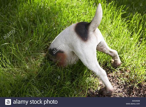 burying a cat in the backyard burying pets in garden garden ftempo
