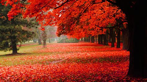 natural park autumn red leaves autumn scenery hd