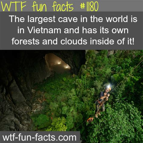 50 wacky things humans do amazing facts about the human wacky series books cave largest cave in the world awesome