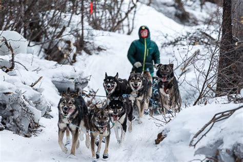 alaskan sled race race alaska related keywords race alaska