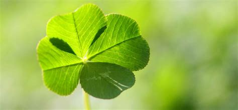 Make Your Luck 13 proven ways to make your own luck inc
