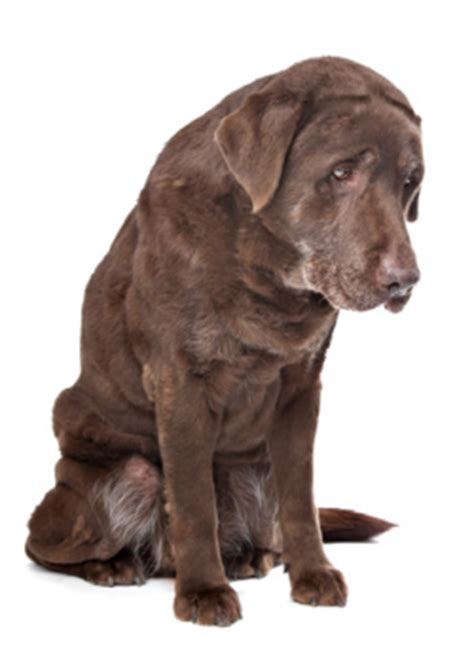 can you give a asprin pet pad your one stop pet resource