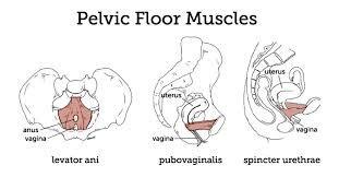 Pelvic Floor Center by Pelvic Floor Muscles Pelv Llc