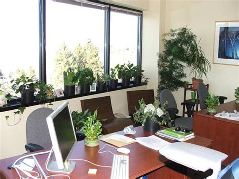 best plants for office desk best indoor plants for office in india plants for office space desk
