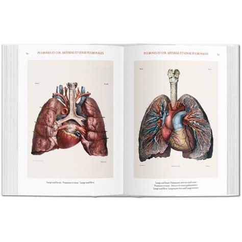 bourgery atlas of human 3836556626 bourgery atlas of human anatomy and surgery iep