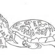 leatherback turtle coloring page 17 best images about coloring page inspiration on