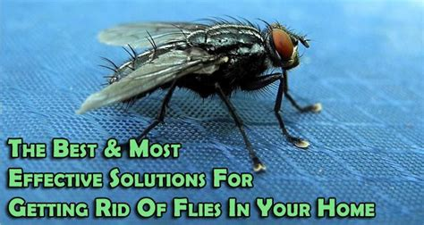 getting rid of flies in backyard how to get rid of flies in your house house plan 2017