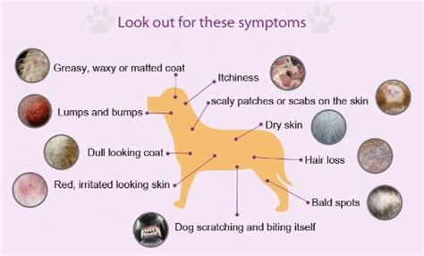 dogs with skin skin disorders canine skin disorders canine allergies breeds picture