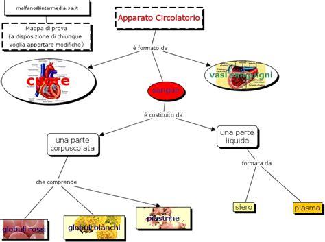 struttura vasi sanguigni apparato circolatorio struttura apparato circolatorio