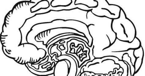 anatomy coloring book harpercollins brain image brain coloring book