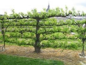 espaliered tree potager garden le jardinier f 226 ch 233