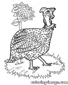 Guinea Fowl Coloring Pages Sketch Page sketch template