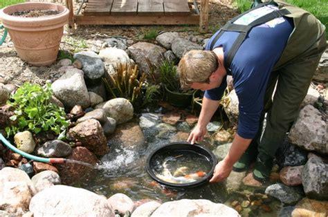 scheduled summer koi pond maintenanceservice rochester
