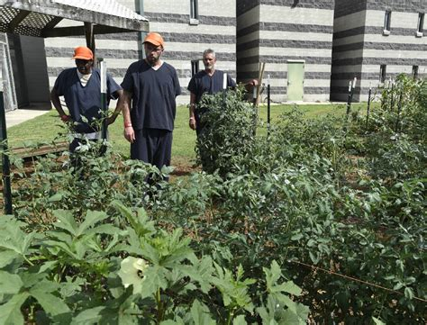 Catoosa County Arrest Records Garden Helps Catoosa County Inmates Grow Responsibility Resourcefulness Times
