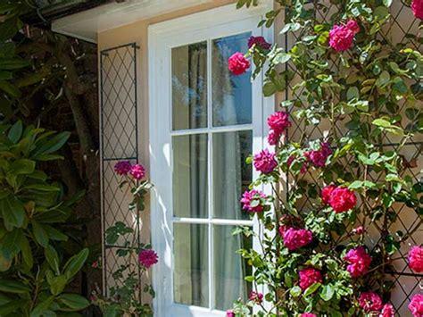 piante da vaso sempreverdi piante ricanti rubiera reggio emilia sempreverdi