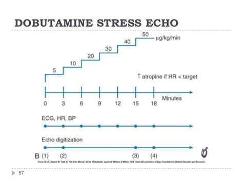 Stress Echo Report Template
