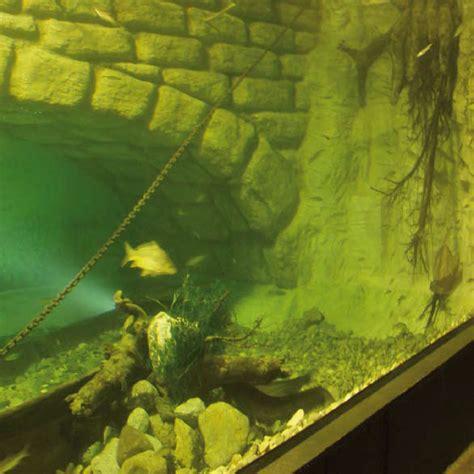Folie Aquarium Kleben by Aquarium Selber Bauen Und Mit Aquariensilikon Abdichten