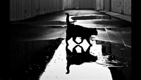 imagenes de zeus blanco y negro incre 237 bles fotos de misteriosos gatos en blanco y negro
