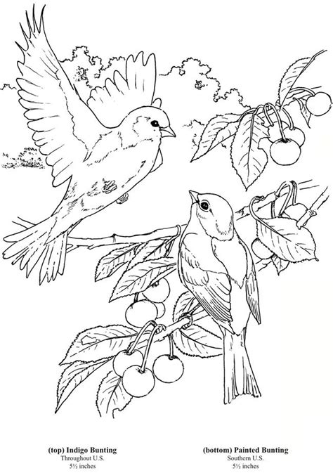 bird design coloring page welcome to dover publications 6 bird colouring pages