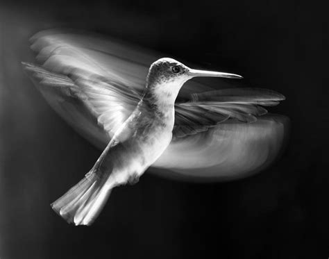 25 stunning photographs of birds in flight 171 twistedsifter