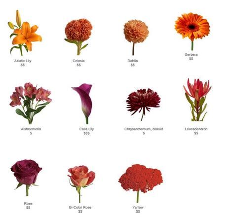 fall flowers in season www imgkid the image kid