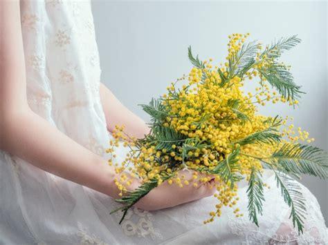 bouquet mimosa e fiori foto mimosa fiore foto e vettori gratis