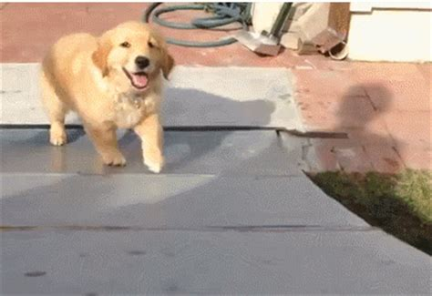 puppy gif an ode to recruiters in puppy gifs linkedin talent