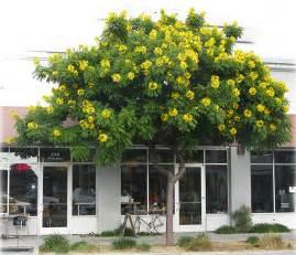 Tropical Plants Los Angeles - ufei selectree a tree selection guide