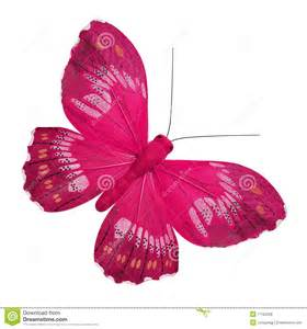 pink butterfly royalty free stock photos image 17762358