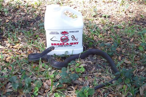 Garden Snake Deterrent Snake Repellents Do They Work Plants Moth