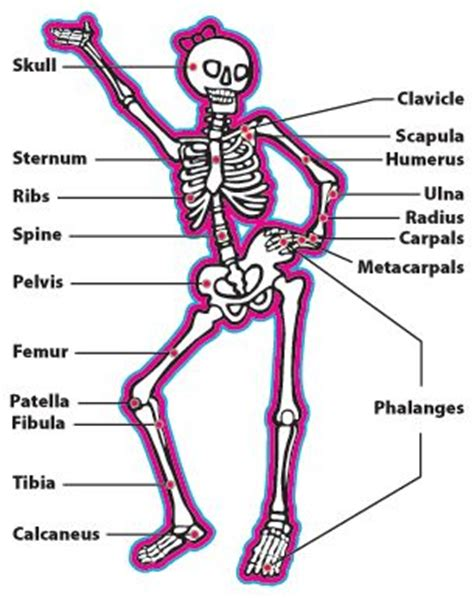 best 25 human skeleton bones ideas only on skeleton anatomy labelled photos name the skeleton bones human anatomy chart