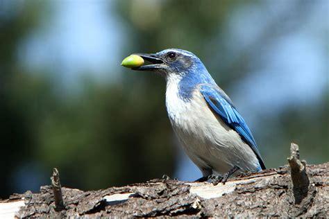 a study of island birds reveals that biodiversity is