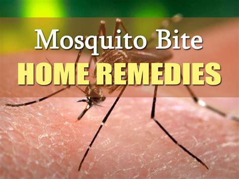 how to get rid of mosquitoes with home remedies how to how to get rid of mosquito bites 12 home remedies