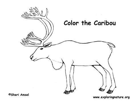 caribou drawing www pixshark images galleries with