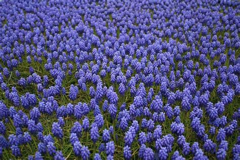 fiori da giardino perenni foto fiori da giardino perenni foto 3 13 tempo libero pourfemme