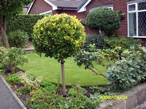 shade tree for small backyard shade tree for small backyard 28 images shade loving