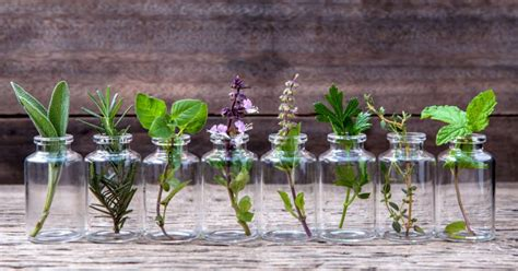 growing herbs indoors growing herbs indoors 10 varieties to grow in water all