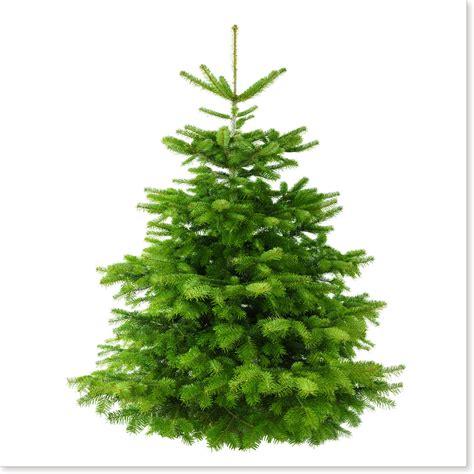 weihnachtsbaum nordmanntanne apv johanniter basel