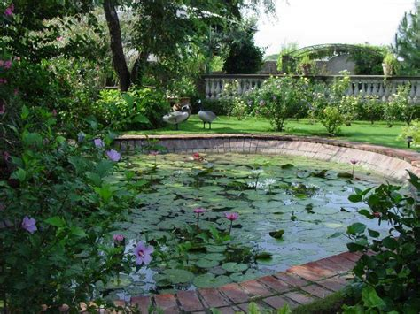 Aquatic Gardens by How To Plan A Water Garden 4li Co