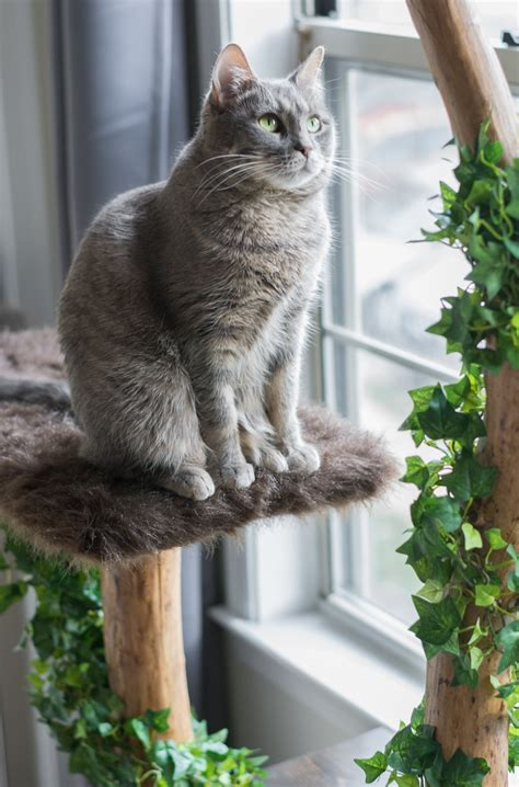 real tree or fake foe cats make a cat tree using real branches my amazing diy cat tree