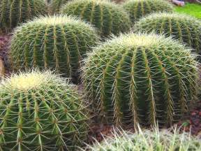 file singapore botanic gardens cactus garden 2 jpg wikipedia