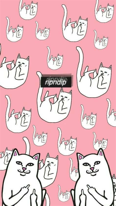 cat ripping wallpaper 866 best wallpaper for phone images on pinterest